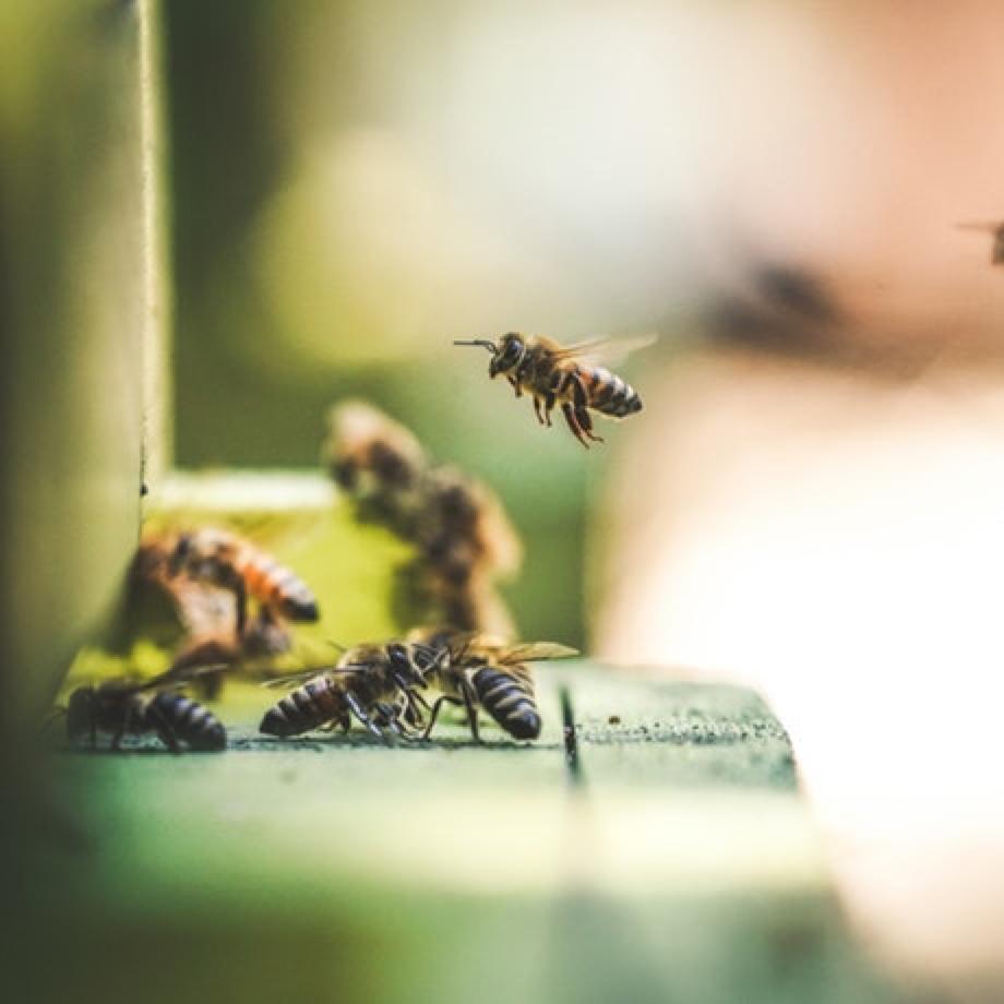 Die Studie zu Pollenallergie in der Schweiz